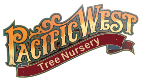 Pacific West Tree